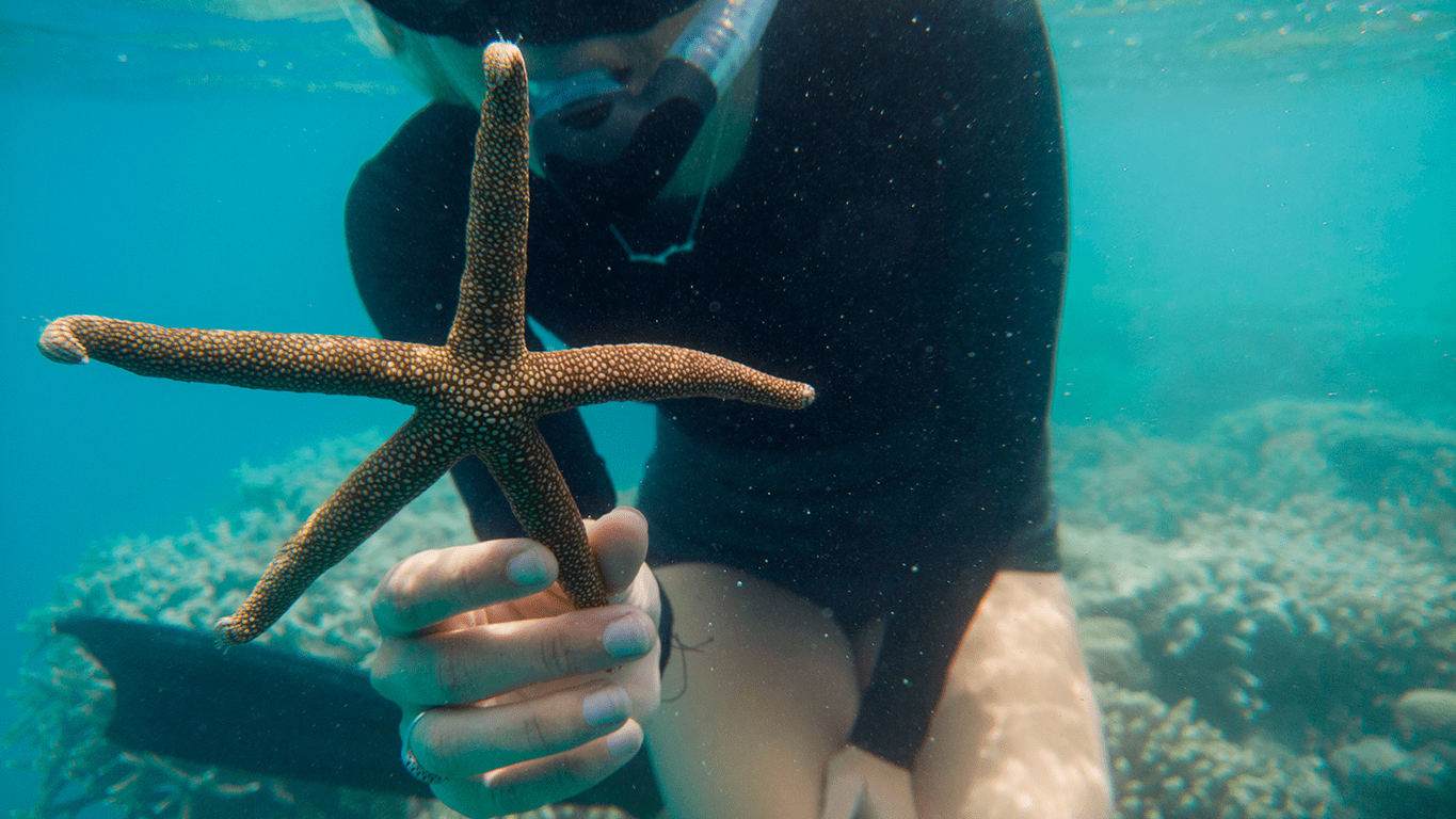 Great-Barrier-Reef_Starfish