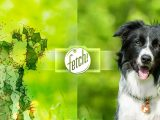 Fetch! for iPhone