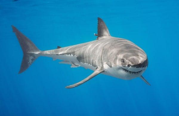 Shark Skype session 2