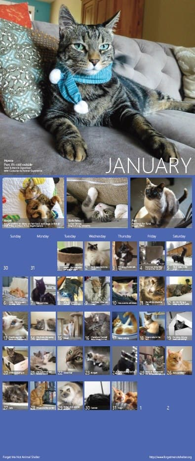 Microsoft's Cats, Dogs of Microsoft calendars are popular fundraisers OnMSFT.com December 28, 2016