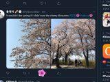 Sakura animation in the windows 10 twitter app