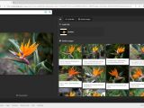 Windows search is getting a new bing visual search feature that's rolling out first in the us - onmsft. Com - december 16, 2019