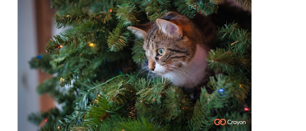 Microsoft Teams Background Christmas Cat Preview