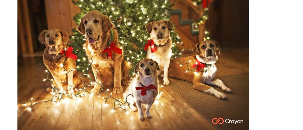 Microsoft Teams Background Christmas Dogs Preview