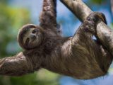 Microsoft will help you chill out with these 15 free 4k wallpapers of cute sloths - onmsft. Com - april 23, 2020